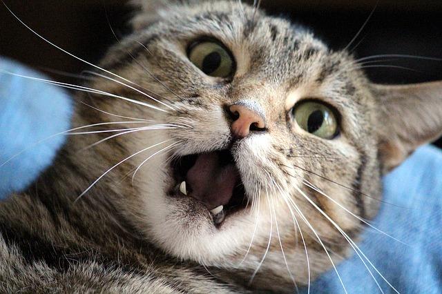 cat-1370024_640